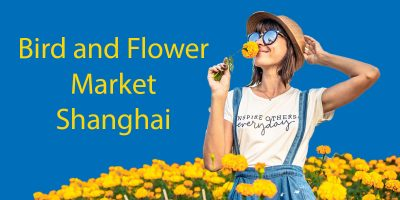 A Visit to the Bird and Flower Market Shanghai