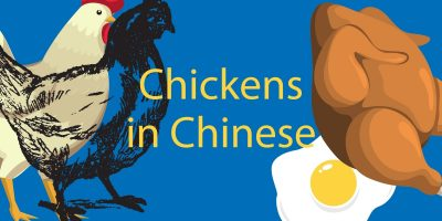 Chicken in Chinese 🐔 Types, Foods, Insults You Never Knew!