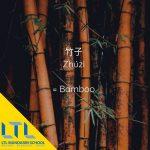 Chinese plant: Bamboo 竹子
