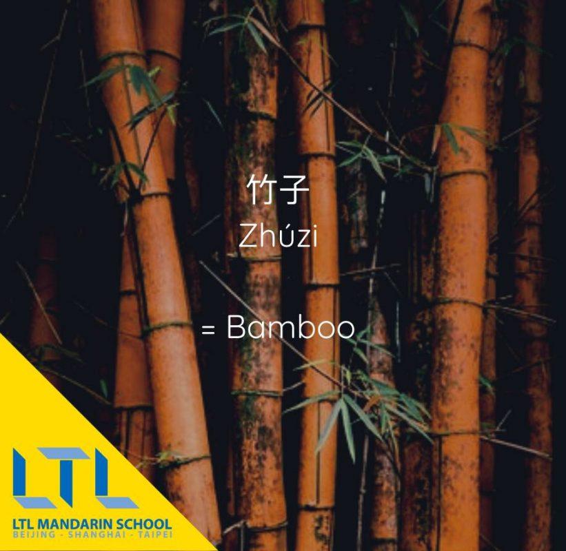 Chinese plant: Bamboo