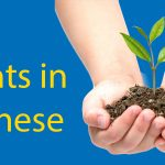 Plants in Chinese Thumbnail