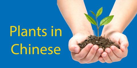 Plants in Chinese