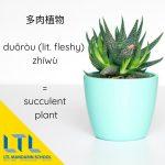 Mandarin name for succulent plant