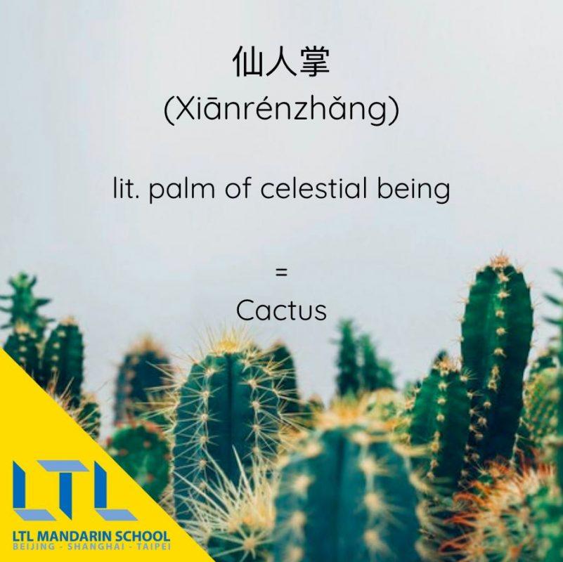 Learn Mandarin PDF: Cactus