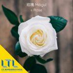 Learn mandarin flower names: Rose