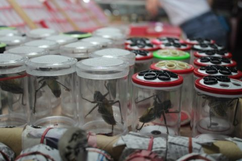 flower and bird market in shanghai_crickets