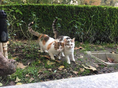 Fuxing Park Stray Cats