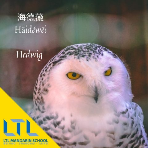 hedwig in chinese