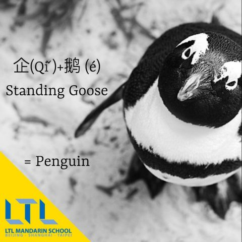 learn chinese resources pdf penguin
