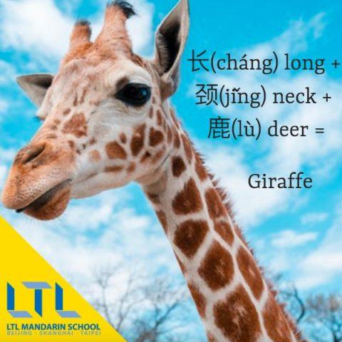 learn mandarin resources pdf giraffe