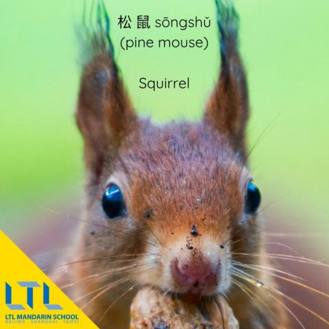 learn mandarin resources squirrel