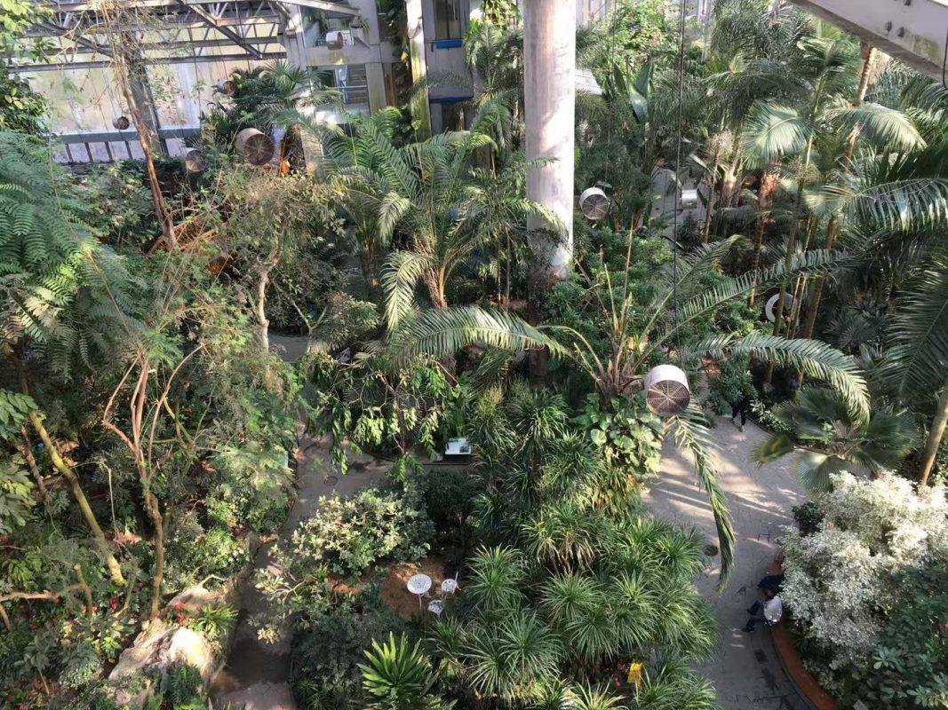 The view of the Shanghai Botanical Garden