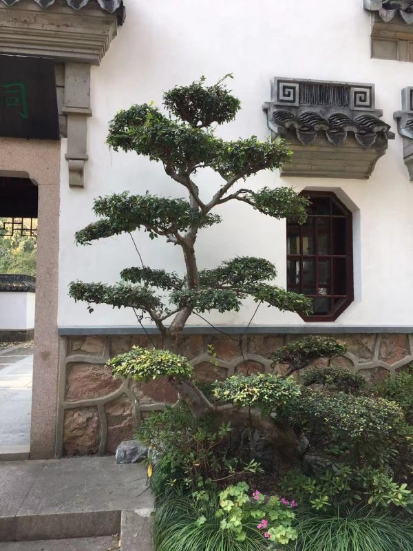 Garden Temple Tree