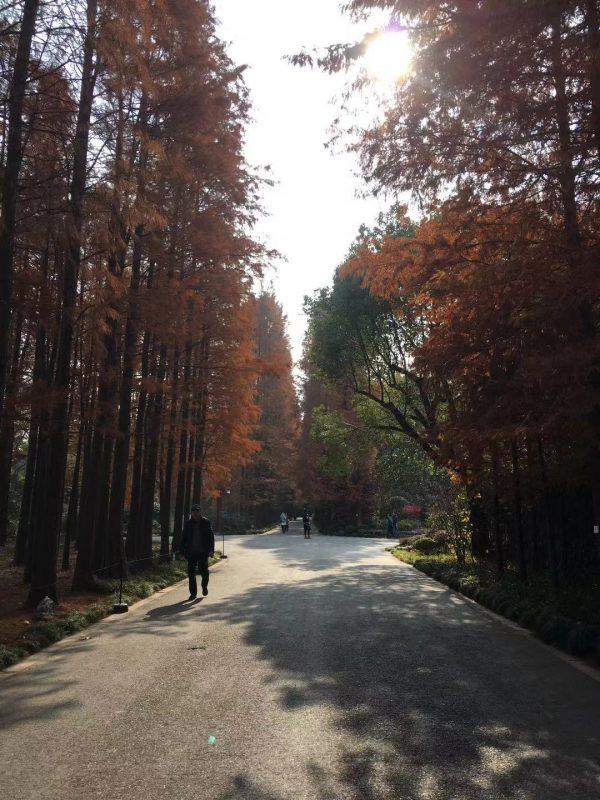 The start of the Shanghai Botanical Garden