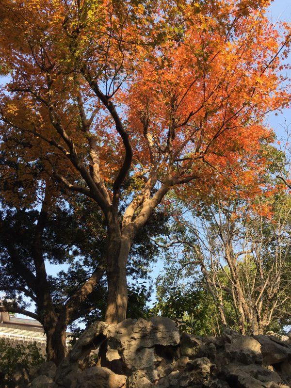 Yu Garden - Fall colors